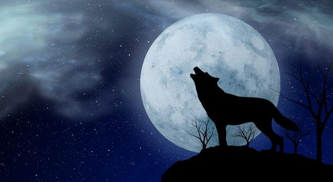 вважається собака воет на луну картинка умела двигаться кадре