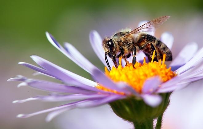 Народные приметы 2 июля, в день Зосима-пчельника