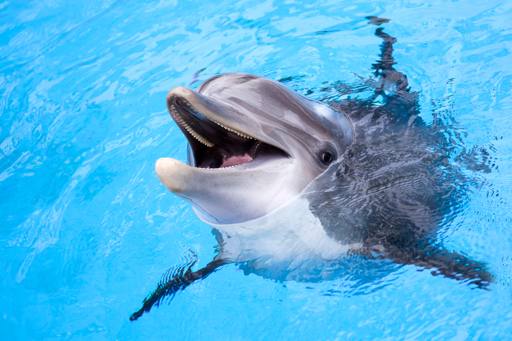 таких случаях фото про дельфинов путевку предоставили