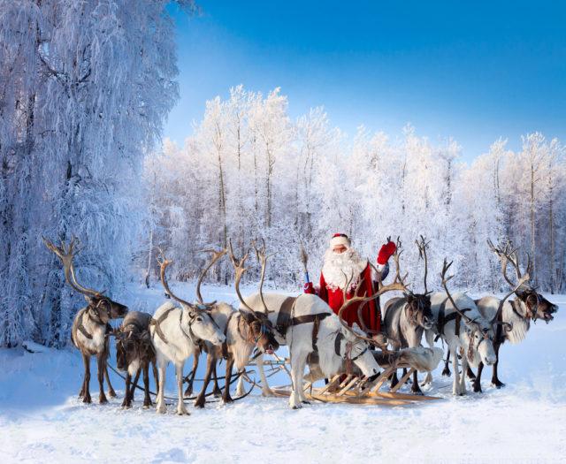 Почему северные олени меняют цвет глаз накануне Рождества? - фото 4