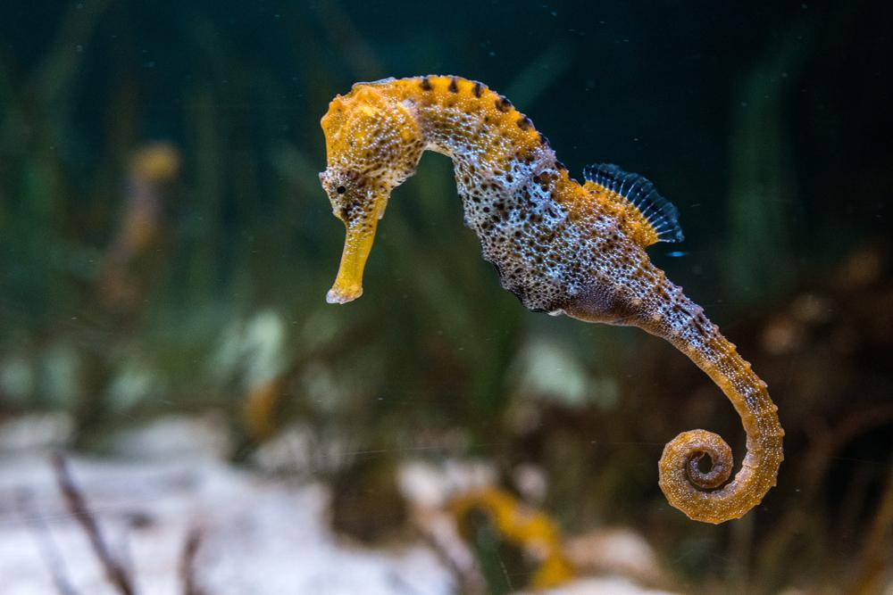 Крым морской конек фото