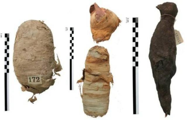 Вы остолбенеете: что показал рентген мумий египетских животных